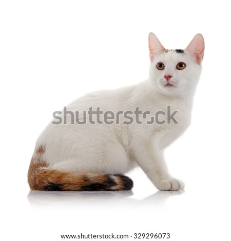 The white domestic cat with a multi-colored tail sits on a white background.