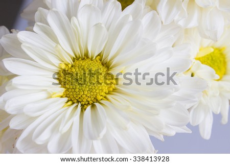 The white flower on the white background - stock photo