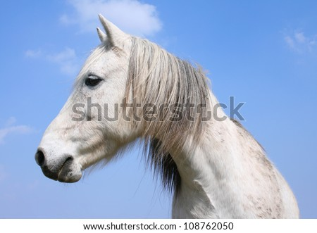 The white horse in north germany - stock photo