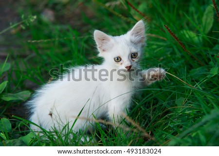 the white kitten on a green grass