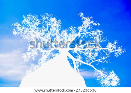 The white tree silhouette on blue cloud background