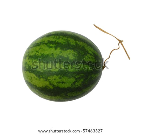 the whole watermelon isolated white