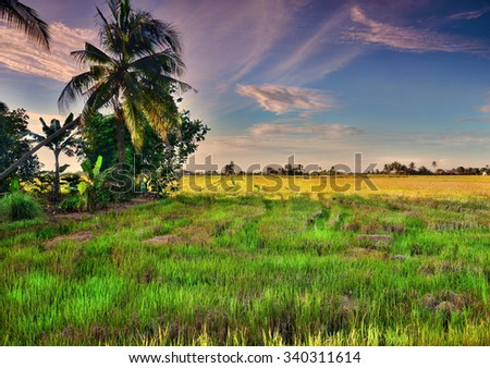 The wide view of Paddy Field in the evening