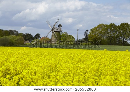 The windmill Seelenfeld (Petershagen, Germany) is a dutch type of windmill and is part of the Westphalia Mill Street (Westfaelische Muehlenstrasse). In the foreground is a yellow blooming colza field.