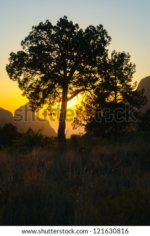 The Window formation and surrounding trees at sunset in the Chisos Mountain Basin section of Big Bend National Park