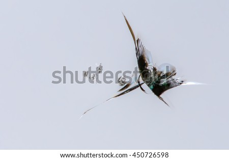 The windshield of a car was damaged by a rock  - stock photo