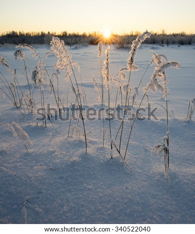 The winter landscape. Snowy forest on a Sunny day. - stock photo