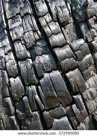 the wood texture from the old logs