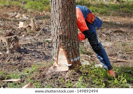 the woodcutter is cutting down a tree with a petrol saw