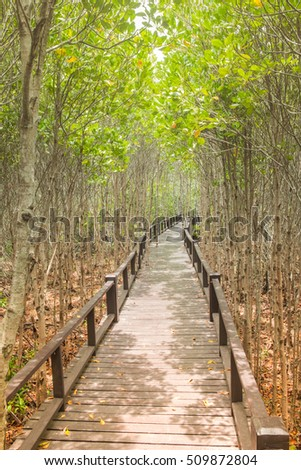 The wooden bridge among beautiful green forest to sunlight