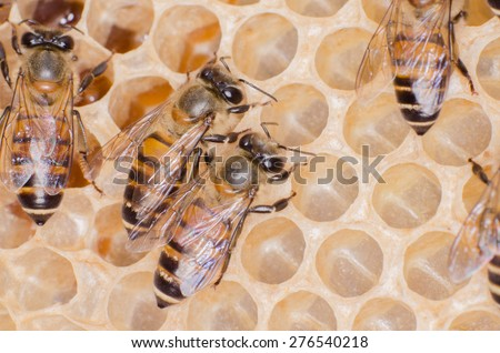The working bees on honey cells. - stock photo