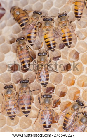 The working bees on honey cells.