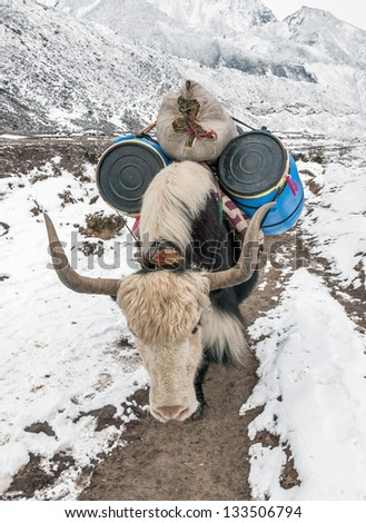 The yak caravan going to Everest Base Camp - Periche, Nepal, Himalayas - stock photo