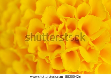 The yellow abstract flower background .