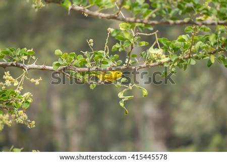 The yellow bird is below the branch