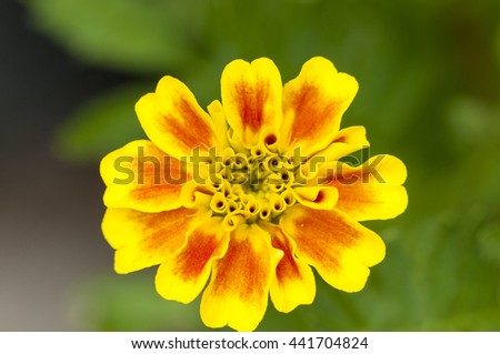 The yellow flowers are blooming beautifully natural . - stock photo