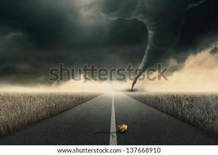 The yellow rose on road awaiting the twister - stock photo