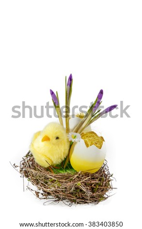 The yellow small chick with egg, natural nest and snowdrops isolated on white background
