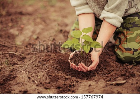 The young man plants a tree.
