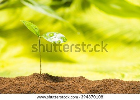 The young sprout grow up from soil - stock photo