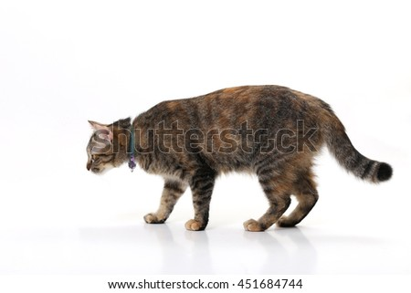 The young tabby cat standing on the white background. - stock photo