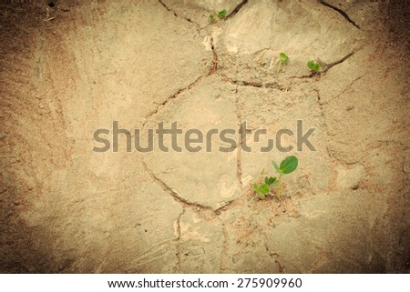 The young trees growth from dried land.Save the world. - stock photo