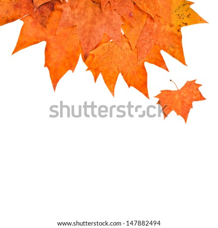 theme of autumn - colored falling dry leafs  isolated on white background