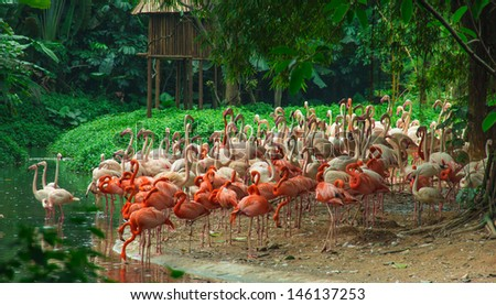 theme of nature in zoo--wildlife