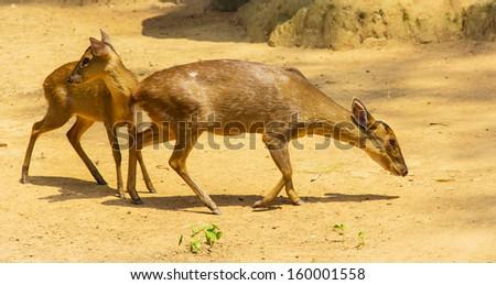 theme of the animal--oryx - stock photo