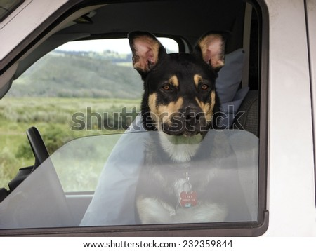 therapy dog in driver seat - stock photo