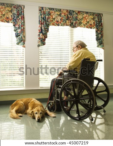 Therapy dog lying next to an elderly man in a wheelchair who looks out a window. Vertical shot.
