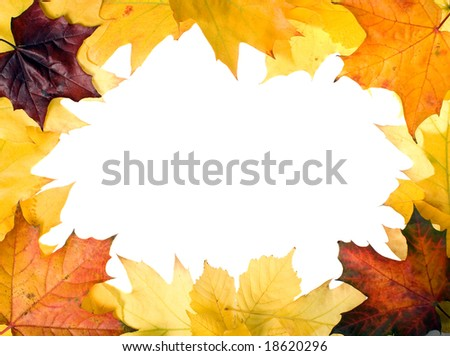 There are autumn leaves for nice designs