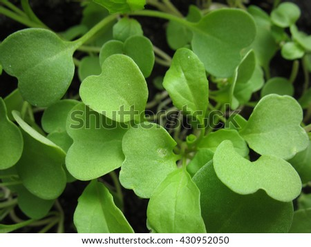 There  are green leaves of a salad - stock photo