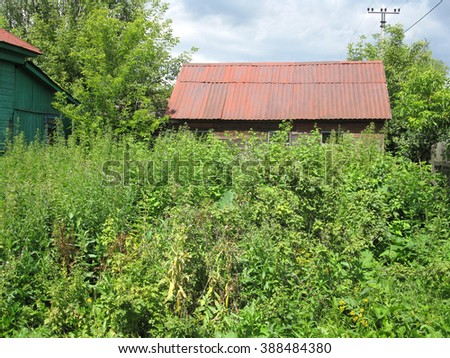 There are green plants and roof of old house       - stock photo