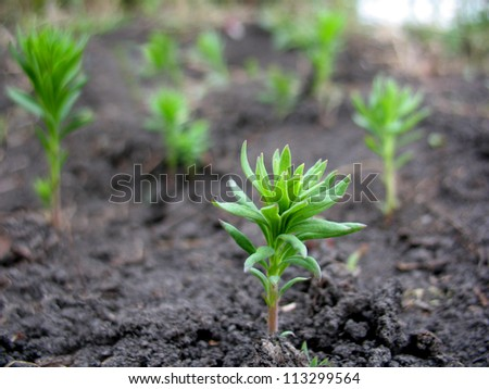 There are green sprout of grass on  ground - stock photo
