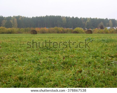 There are haystackes, foggy forest  and field of green grass - stock photo