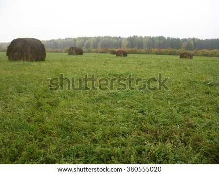 There are haystacks  and field of green grass - stock photo