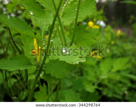 There are leaves of plants and drops of dew. Closeup - stock photo