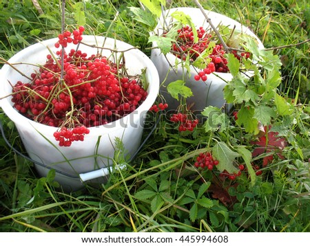 There are red berries of guelder-rose in  buckets and green grass - stock photo