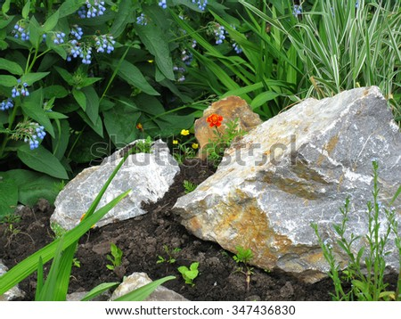 There are small flowers and stone - stock photo