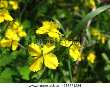 There are yellow flowers and green grass - stock photo