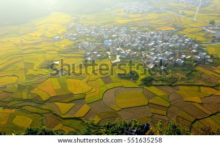These are farmland and farmers grow rice on them. It is autumn. All the farmland turned golden.