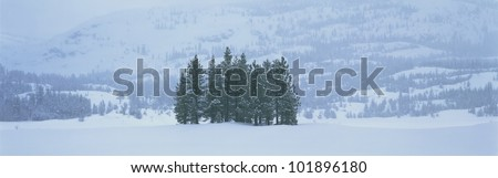 These are winter trees in a snow storm. They are surrounded by a snowy hillside.