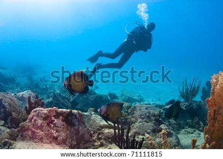 These French Angel fish seemed to be willing to entertain all of the divers. - stock photo