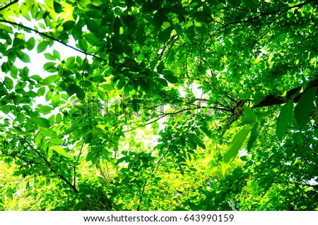 https://thumb1.shutterstock.com/display_pic_with_logo/167494286/643990159/stock-photo-they-are-green-leaves-643990159.jpg