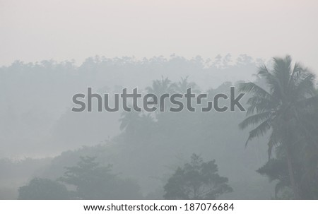 Thick fog in tropical palms jungle before sunrise at morning - stock photo