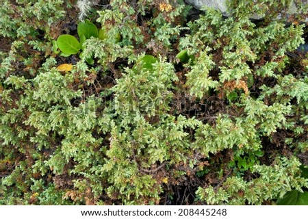 Thick, lush, green plants. Natural vegetative background