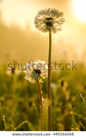 thick morning fog in the summer forest. thick morning fog in the forest at pond. Morning landscape in summer thick fog. dense fog in the morning.  early morning. forest hiding in the fog. dandelion.   - stock photo
