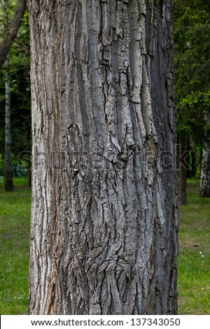 Thick tree trunk closeup - stock photo