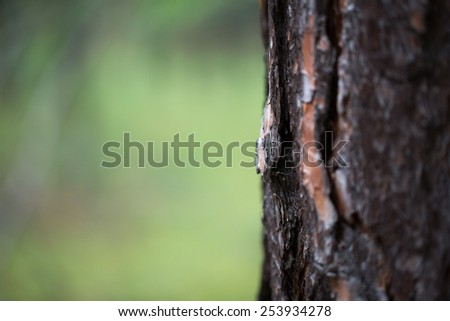 Thick tree trunk photo for you - stock photo